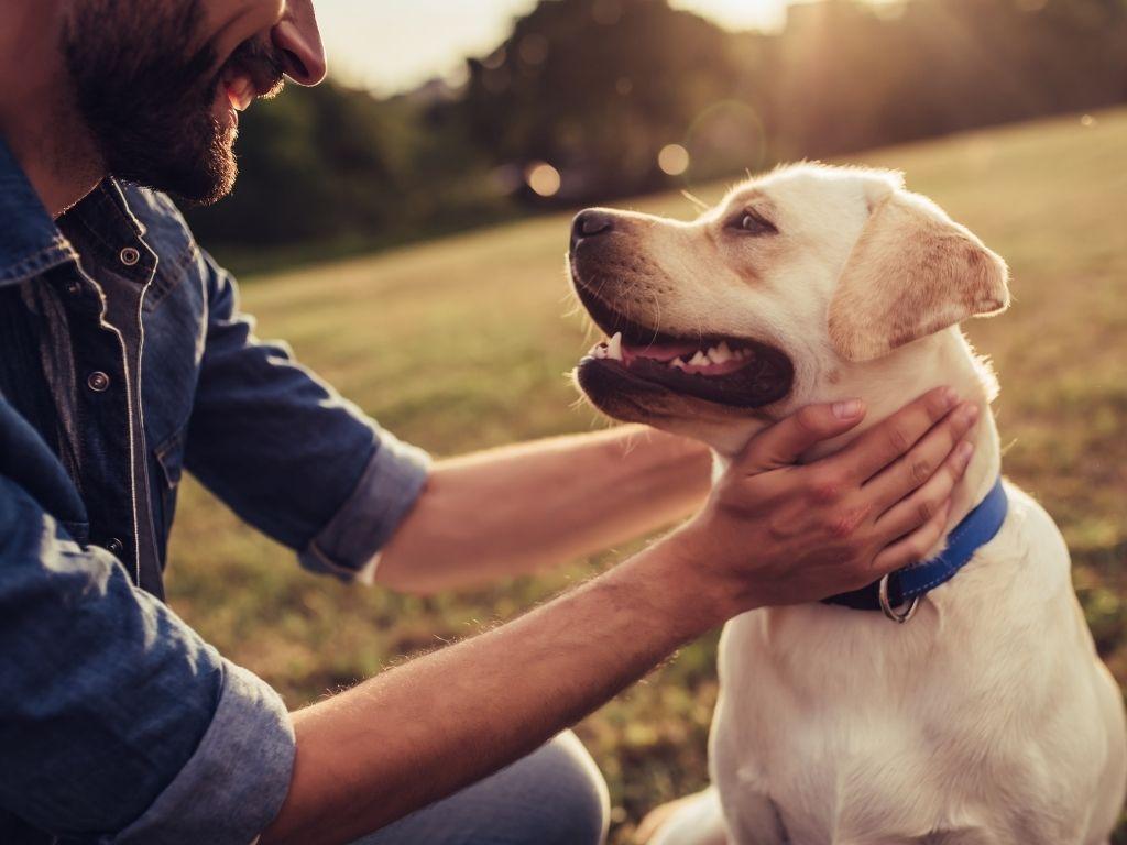 Νομοσχέδιο για την ευζωία των ζώων συντροφιάς
